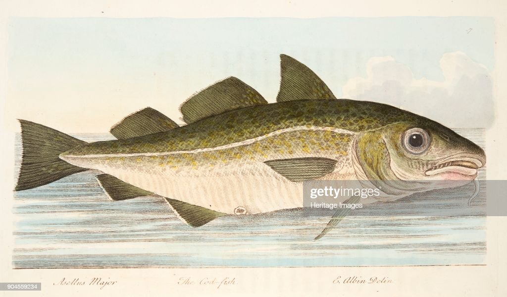The Cod Fish : News Photo