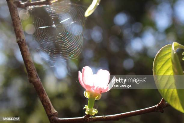 the coexistence and survival in nature. - peach blossom stock pictures, royalty-free photos & images