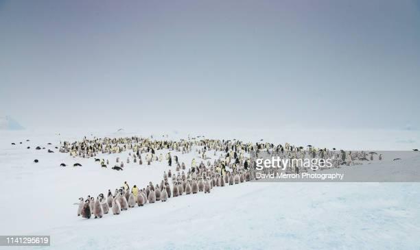 the colony - 南極海 ストックフォトと画像