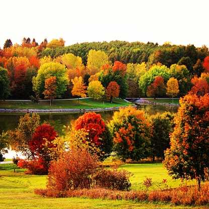 The color of fall 882553434