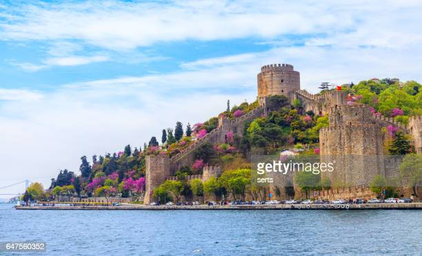 the color of istanbul erguvan, judas tree or redbud - straits stock pictures, royalty-free photos & images