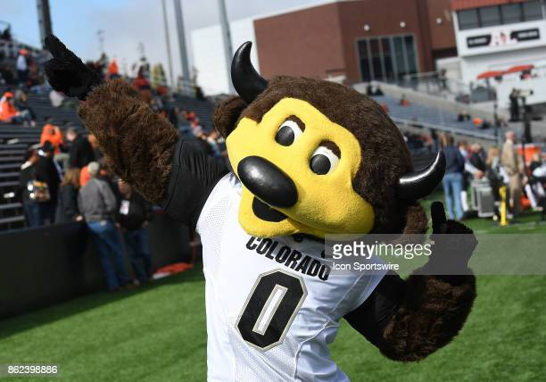 The Colorado Buffaloes mascot Chip performs on the sideline during a college football game between the Colorado Buffaloes and Oregon State Beavers on...