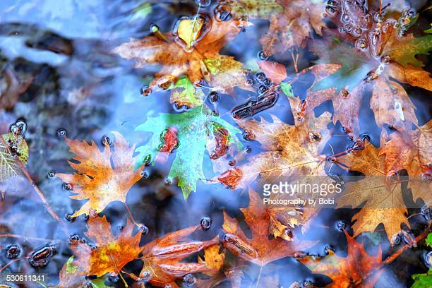 The colorful leaves under mountain spring water
