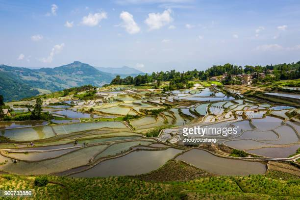 the colorful terraced fields - yunnan province stock pictures, royalty-free photos & images