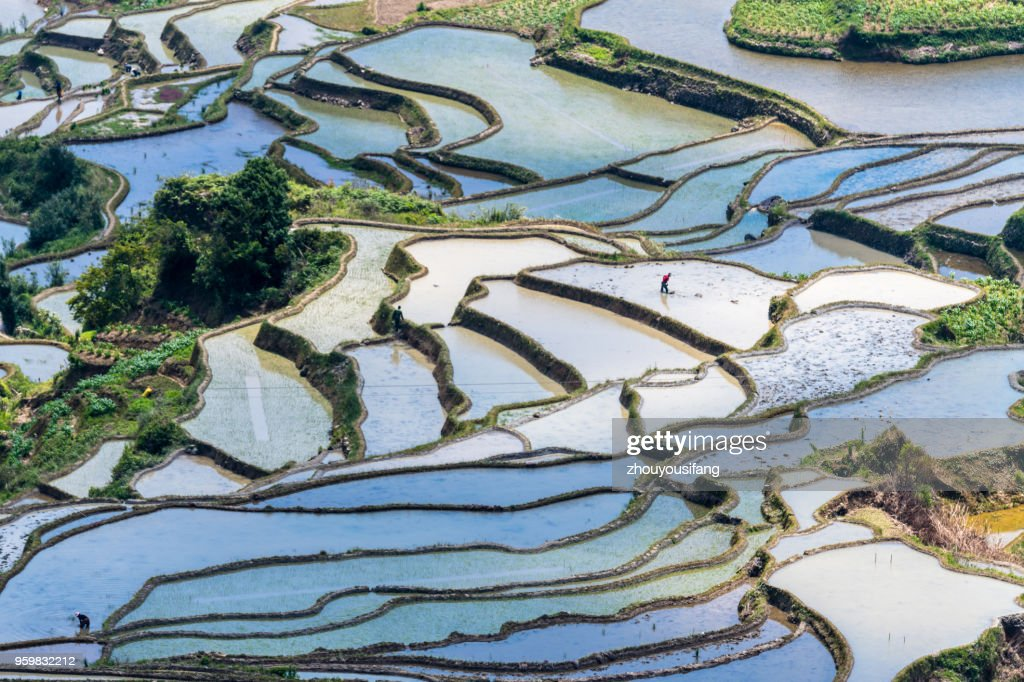 The colorful terraces and farmers working in terraced fields : Stock-Foto