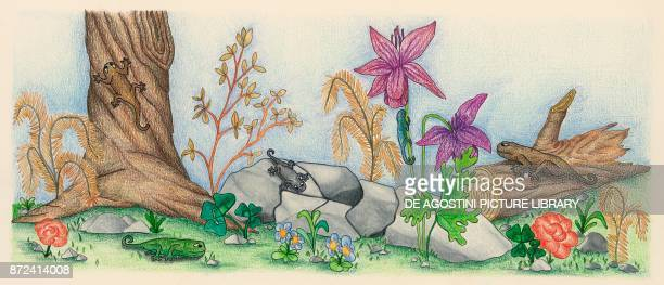 The colors taken by chameleons to camouflage with the surrounding environment children's illustration drawing