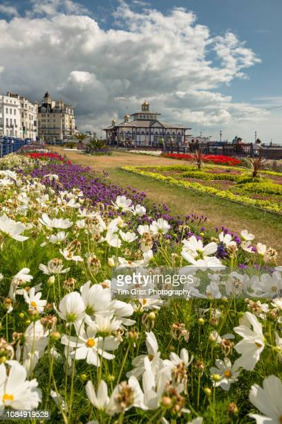 the colourful carpet gardens and pier, eastbourne, east sussex, uk - イーストサセックス ストックフォトと画像