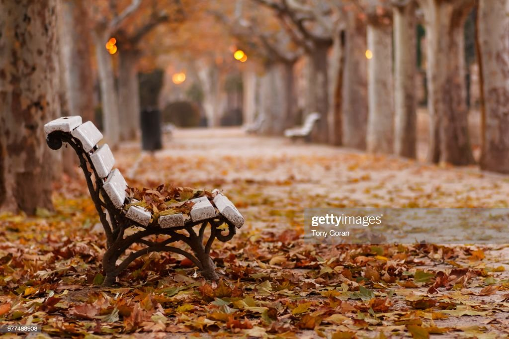 The colours of autumn! : Stock Photo