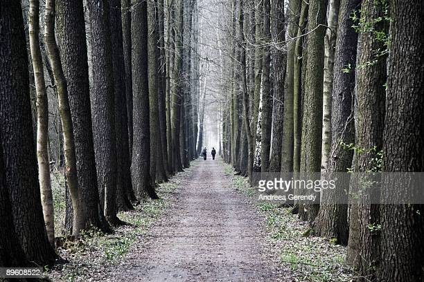the colours of the trees - spreewald stock pictures, royalty-free photos & images