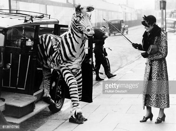 The comedy zebra from the Christmas circus at Olympia leaves a taxi... News  Photo - Getty Images