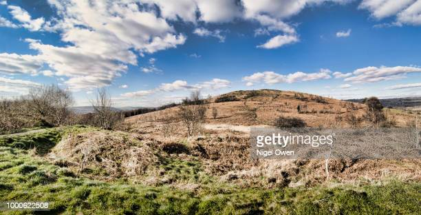 the common - nigel owen stock pictures, royalty-free photos & images
