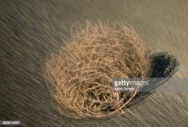 the concept of change - tumbleweed stock photos and pictures