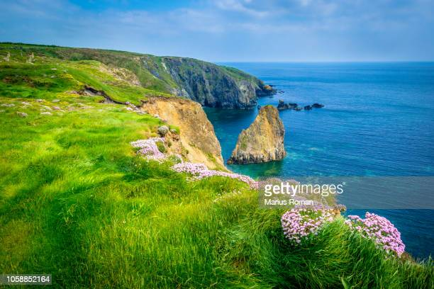 the copper coast geopark, county waterford, ireland. summer's day at cooper coast with wild flowers and sea stack, before the storm. - irlanda fotografías e imágenes de stock