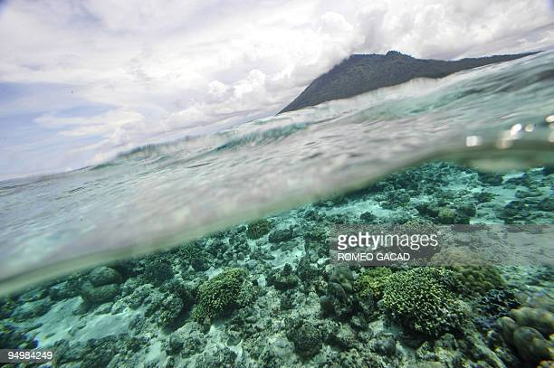 The coral reef is pictured off Bunaken Island marine protected national park in Manado on May 13 2009 as the capital city of northern Sulawesi hosts...