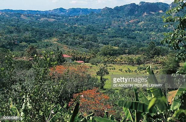 The Cordillera Central near Utuado Puerto Rico United States of America