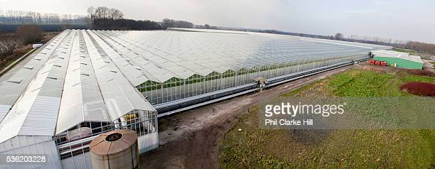 The Cornerways tomato nursery is the largest greenhouse in the UK It is attached to the British Sugar factory in Wissington Norfolk The project is a...