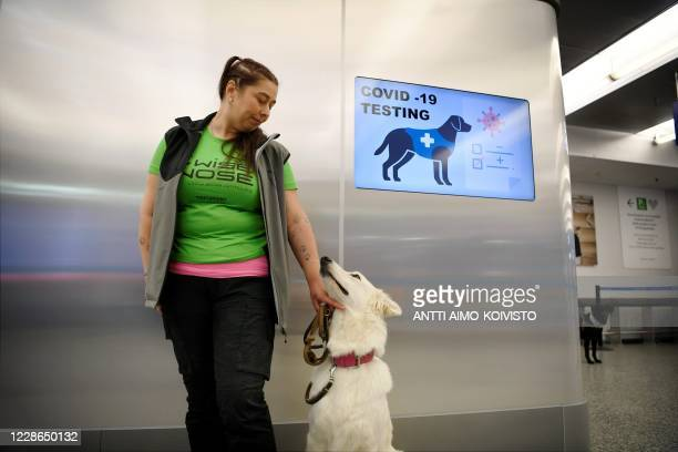 The coronavirus sniffer dog named E.T. Receives a cuddle from the trainer Anette Kare at the Helsinki airport in Vantaa, Finland, where he is trained...