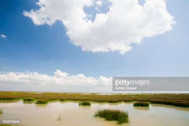 The Coto Donana, Andalucia, Spain, one of the most imortant wetland wildlife sites in Europe.