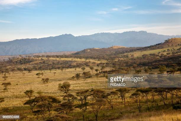 The Crater Area in Queen Elizabeth National Park with view of the Rwenzori Mountains Kasese Uganda East Africa Africa February