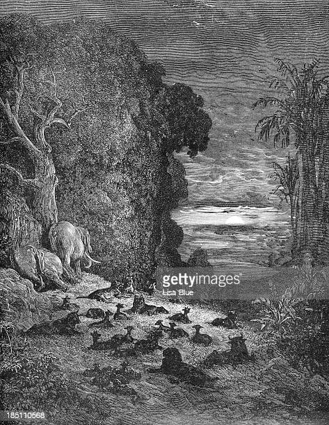 the creation of quadrupeds - etching stock pictures, royalty-free photos & images