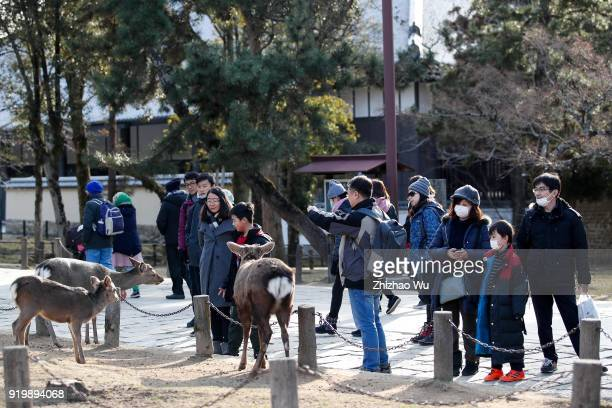 The crowd feeds deer at Nara Park of Nara prefecture on February 18 2018 in Osaka Japan Many Chinese tourists choose to travel overseas during the...