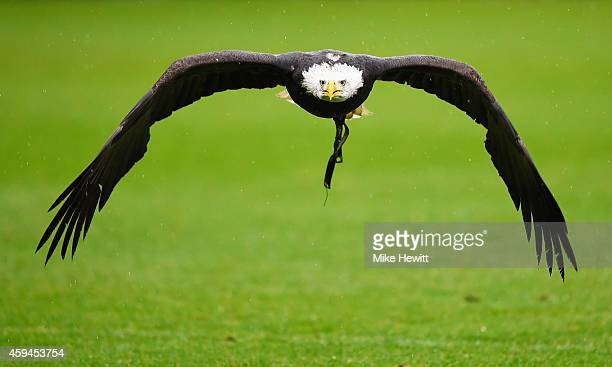 The Crystal Palace eagle flies over the pitch prior to the Barclays Premier League match between Crystal Palace and Liverpool at Selhurst Park on...