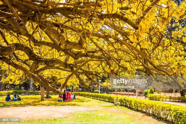 the cubbon park of bangalore - bangalore stock pictures, royalty-free photos & images