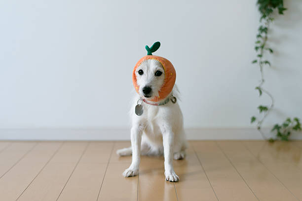 The Cute Dog With A Tangerine Cap Wall Art