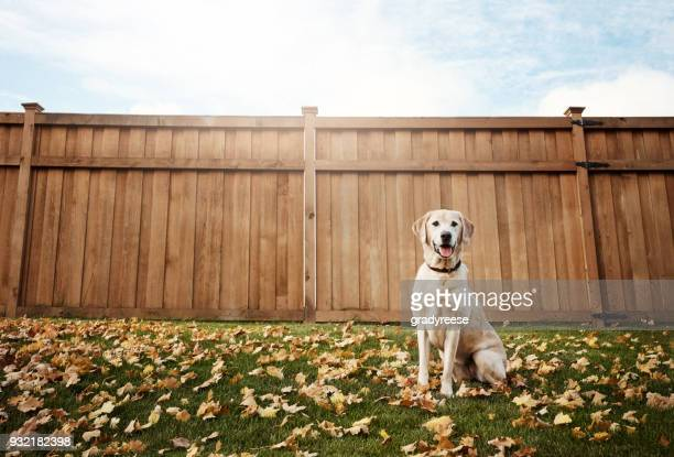 the cutest dog in town - autumn dog stock pictures, royalty-free photos & images