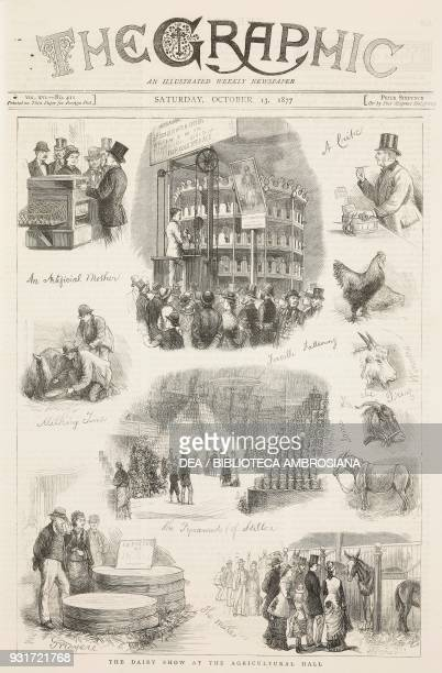 The dairy show at the Agricultural Hall milking cheese production forms of Gruyere and Stilton London United Kingdom illustration from the magazine...