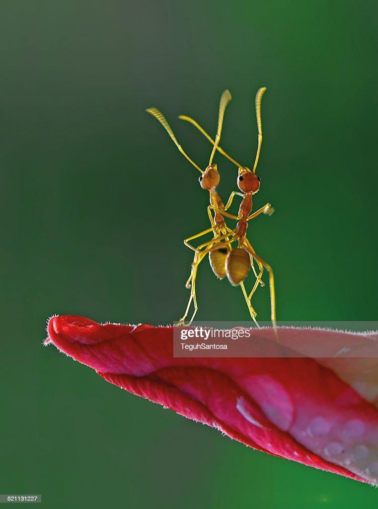 Ants like dancer.
