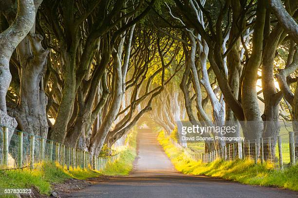 The Dark Hedges, County Antrim, Northern Ireland