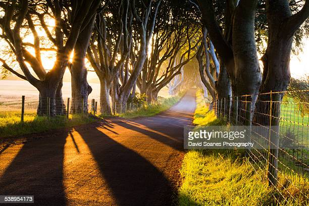 the dark hedges, county antrim, northern ireland - county antrim stock pictures, royalty-free photos & images