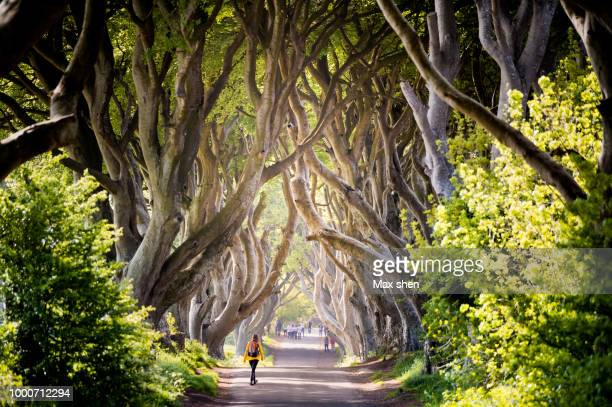 the dark hedges - county antrim stock pictures, royalty-free photos & images