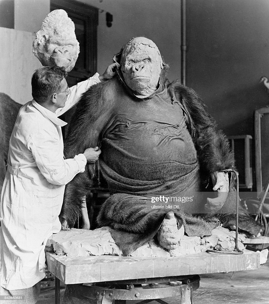 Taxidermy: Gorilla 'Bobby' of the Berliner zoo : News Photo