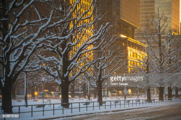 The daybreak after the winter snowstorm in Marunouchi Chiyoda-ku Tokyo Japan – January. 23 2018. The sunrise illuminates the buildings and a line of snowy ginkgo trees, which stand along the Gyoko-dori toward the Tokyo Station.
