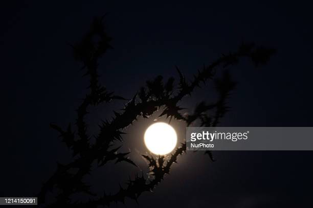 The dazzling Super Flower Moon of May 2020 as seen rising over the Aegean Sea and Thessaloniki city in Greece from Kalochori on May 7 2020 The rise...