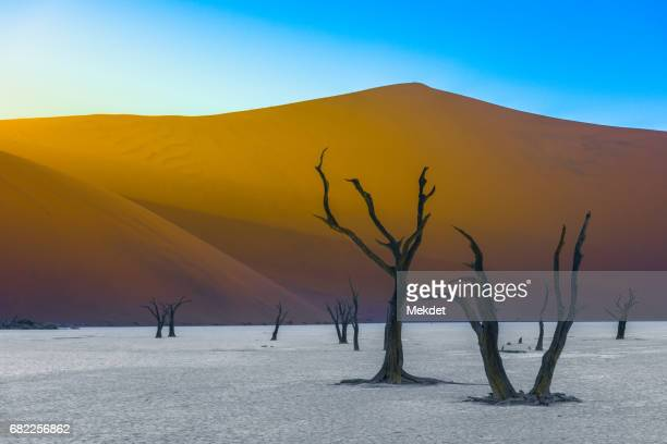 The Dead Acacia Trees and Sand Dunes Landscape at Dead Vlei, Namib Desert, Namibia