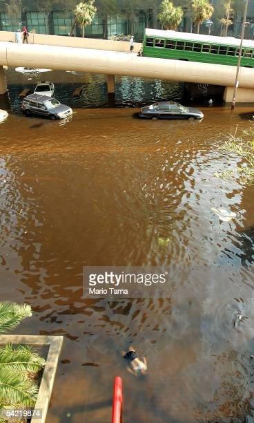The dead body of a female victim of Hurricane Katrina floats in the water surrounding the Superdome September 2 2005 in New Orleans Louisiana Rescue...