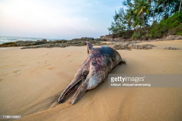 the dead dolphin on the beach - dead body imagens e fotografias de stock