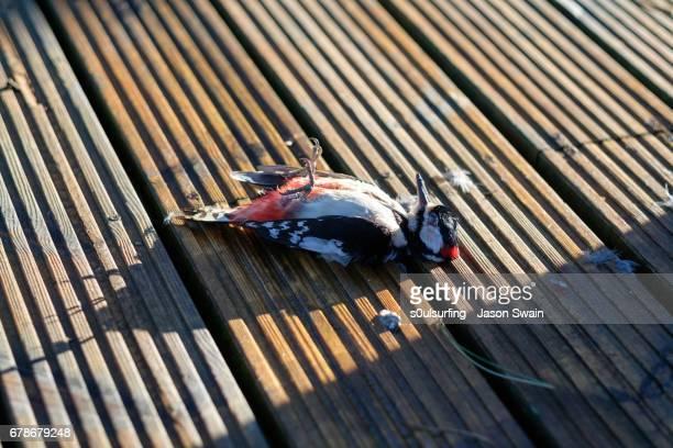 the dead woodpecker - s0ulsurfing stockfoto's en -beelden