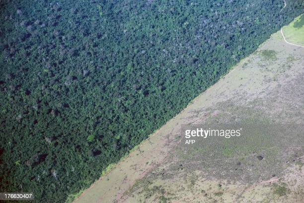 The deforestation area stops at the border of Indio's reservation area in Para state northern Brazil on August 9 2013 AFP PHOTO / YASUYOSHI CHIBA /...