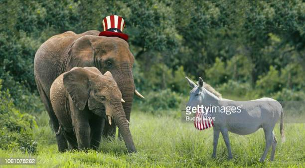 the democratic donkey and a republican elephant meet to discuss politics. - partisan politics stock pictures, royalty-free photos & images
