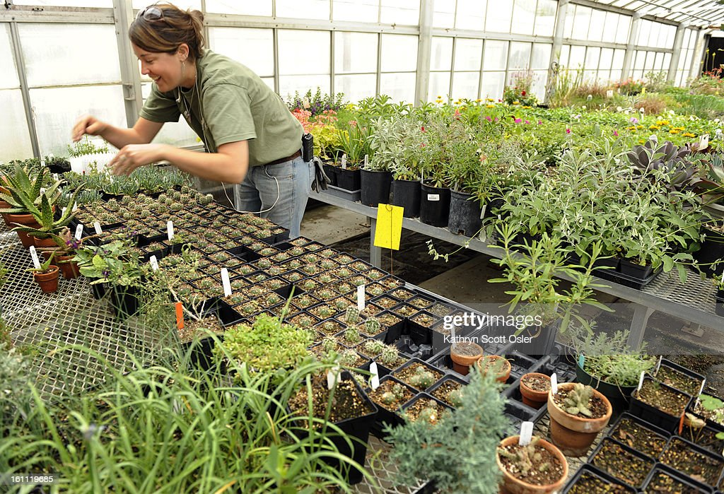 JS) PLANTSALE_KSO_5_1_09009 - The Denver Botanic Gardens gears up ...
