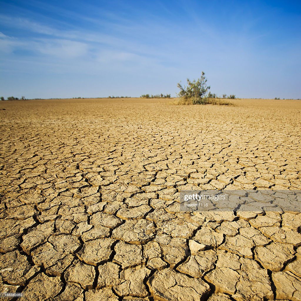The Desert In Western India : Stock Photo