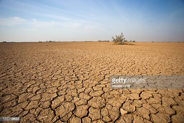 the desert - drought stock pictures, royalty-free photos & images