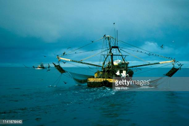 37 Bottom Trawl Pictures, Photos & Images - Getty Images