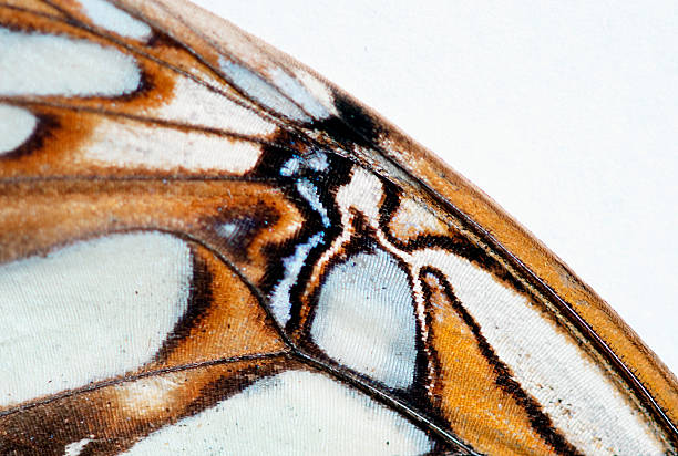 The detail of a butterfly wing is pictured in Lake Tahoe, Nevada.