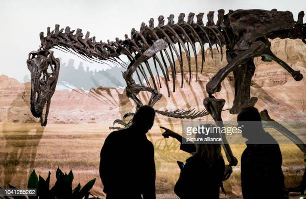 The dinosaur 'Allosaurus'can be seen as part of the exhibition 'Jurassic Harz Dinosaurs from Oker to Wyoming' in the exhibition halls of the Museum...