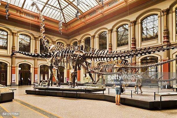 the dinosaur hall, museum fur naturkunde, berlin, germany - natural history museum stock pictures, royalty-free photos & images